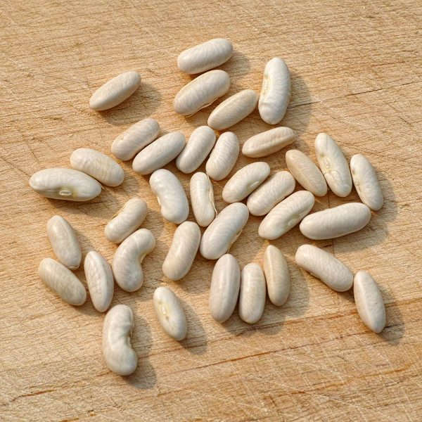 Gold Rush Bean Seeds