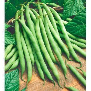 Provider Bean Seeds