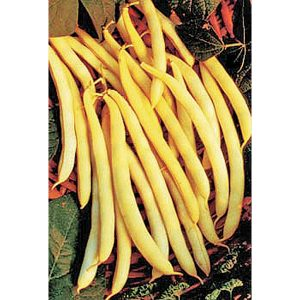 Cherokee Wax Yellow Bush Bean