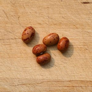 French Horticultural Bean Seeds