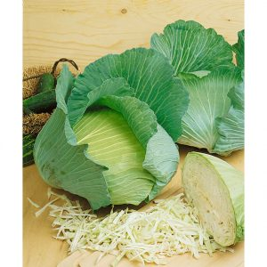 Late Flat Dutch Heirloom Cabbage