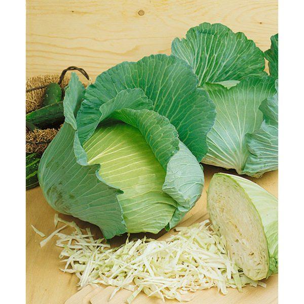 Late Flat Dutch Heirloom Cabbage
