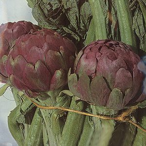 Romanesco Italian Gourmet Artichoke