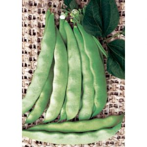 Corallo Italian Green Bean from our Italian Gourmet Seed Collection