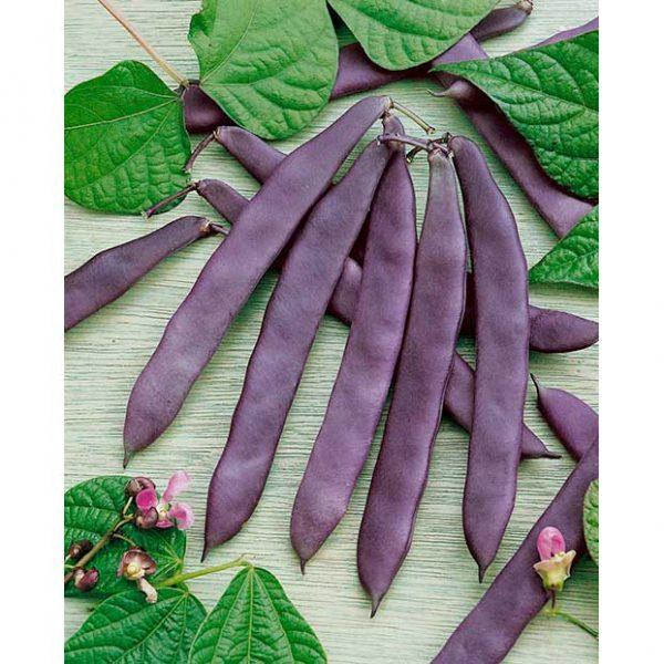 Certified Organic Dow Purple Pod Bean Seeds