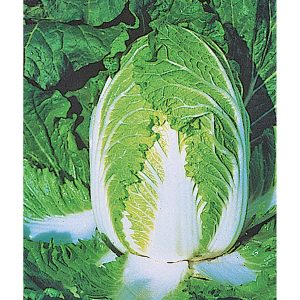 China Express F1 Hybrid Chinese Cabbage