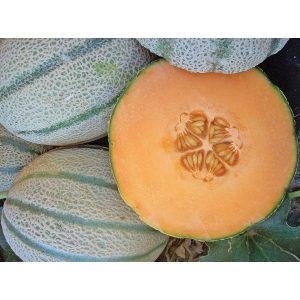 Vida F1 Hybrid Tuscan Melon