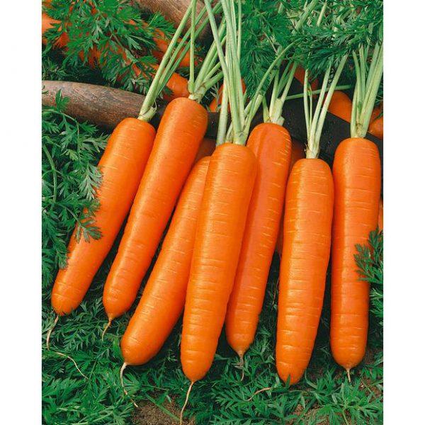 Nantes, Coreless Scarlet Carrot