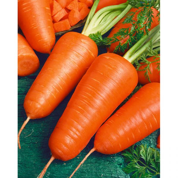 Red Core Chantenay Heirloom Carrot