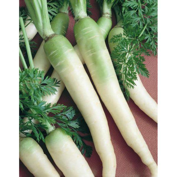 Lunar White Carrot
