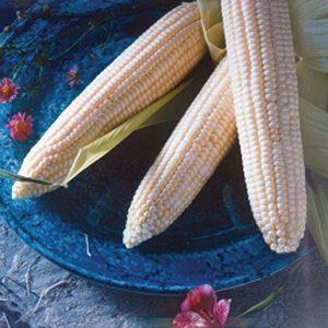 Argent White Hybrid Sweet Corn