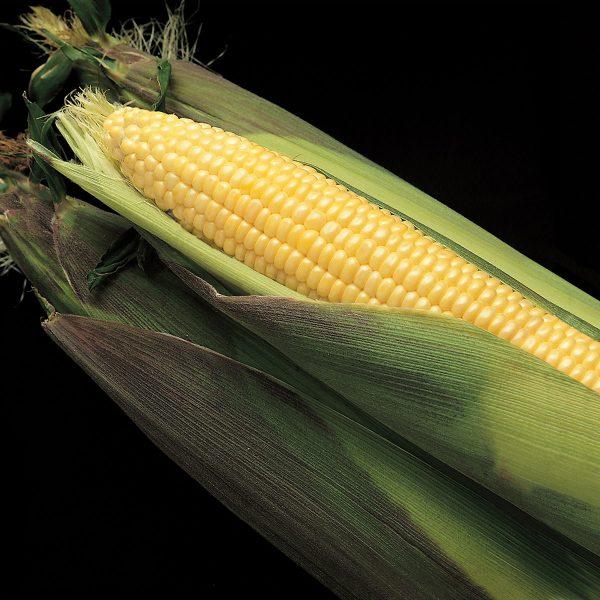 Kandy Korn EH Sweet Corn Seeds