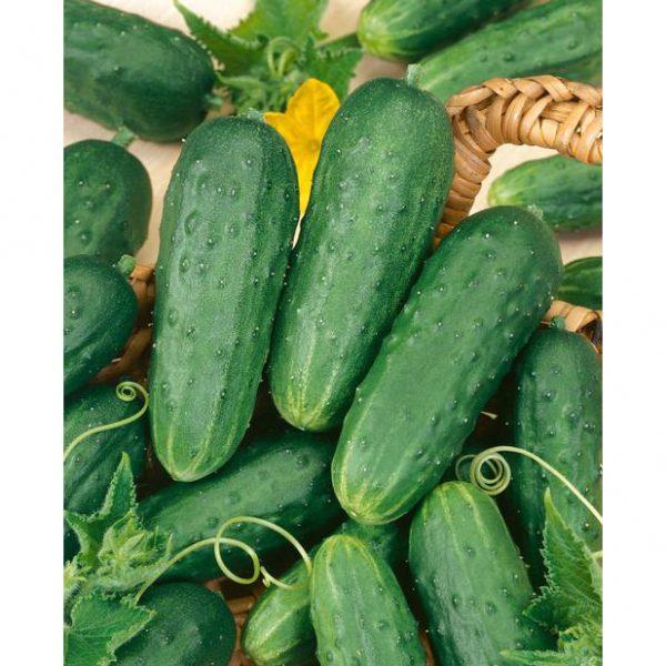 Homemade Pickles Pickling Cucumber