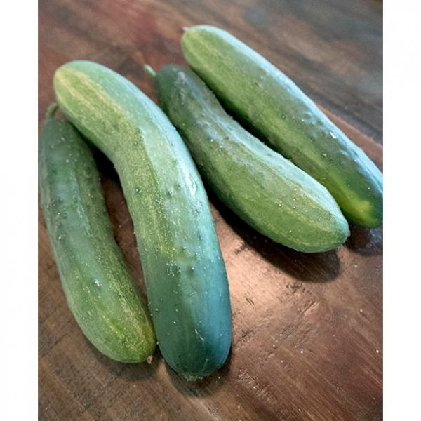 Hartley F1 Hybrid Cucumber Seeds