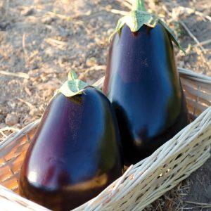 San Marino F1 Hybrid Eggplant