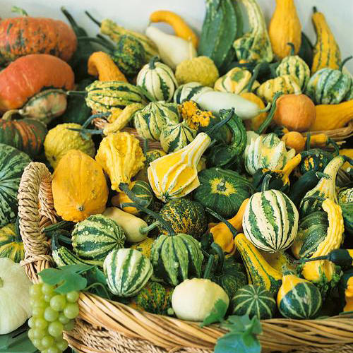 Small Fruited Gourd Mix