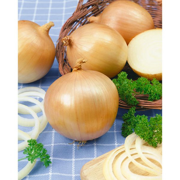 Yellow Granex F1 Onion
