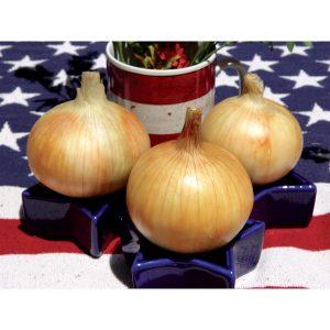 Timon F1 Hybrid Onion