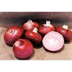 Desert Sunrise F1 Hybrid Onion