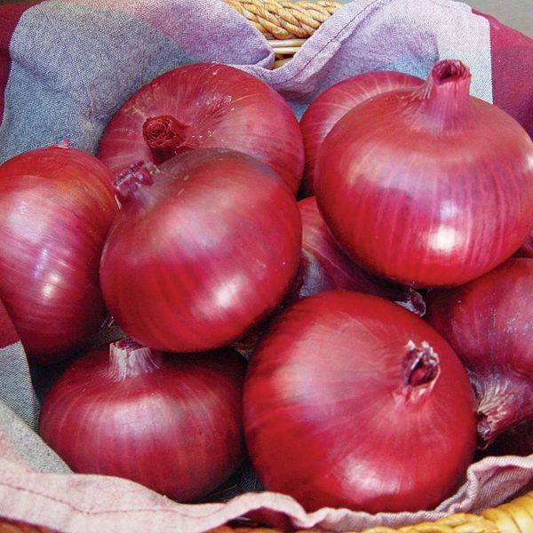 Chianti F1 Hybrid Red Grano Onion