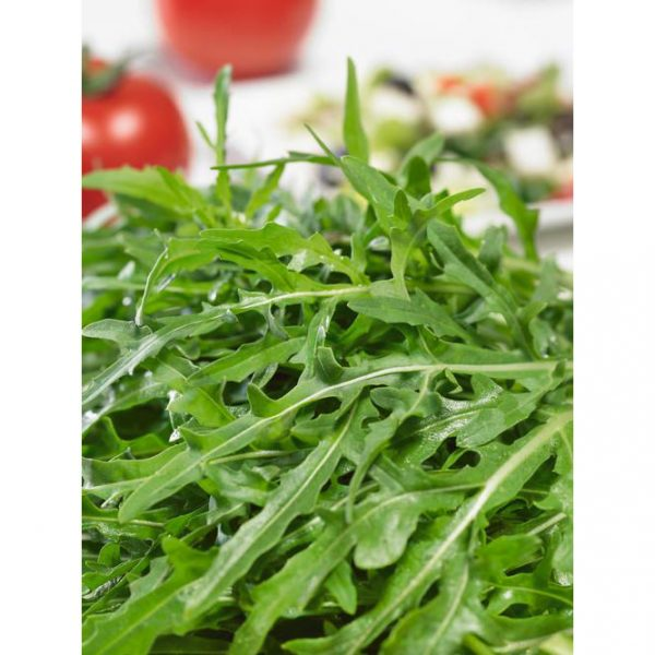 Rocket Italian Cress Arugula from our Italian Gourmet Seed Collection