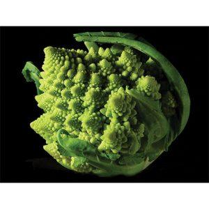 Romanesco Natalino Cauliflower aka Roman cauliflower or broccoflower.