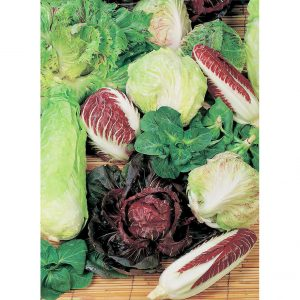 Miscuglio Mixture Chicory from our Italian Gourmet Seed Collection