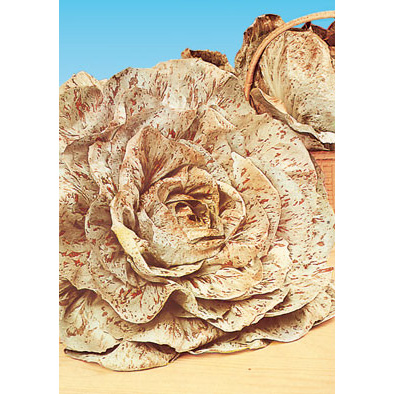 Varigata Di Castelfranco Chicory from our Italian Gourmet Collection of Seeds