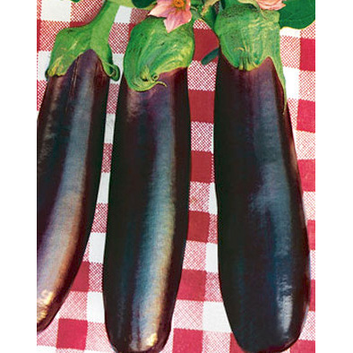 Violetta Lunga di Napoli 2 Italian Eggplant Seeds from our Italian Gourmet Seed Collection
