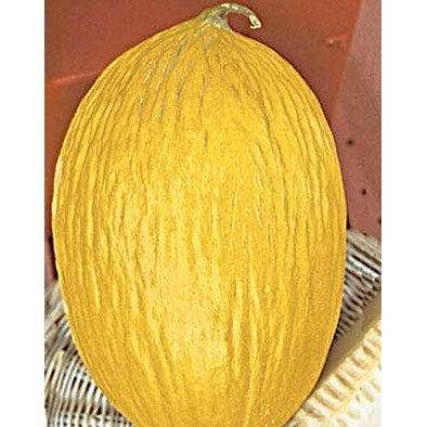 Rugoso Di Cosenza Giallo Italian Melon Seeds from our Italian Gourmet Seed Collection