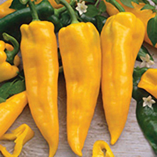 Golden Horn F1 sweet Corno di Toro type Pepper