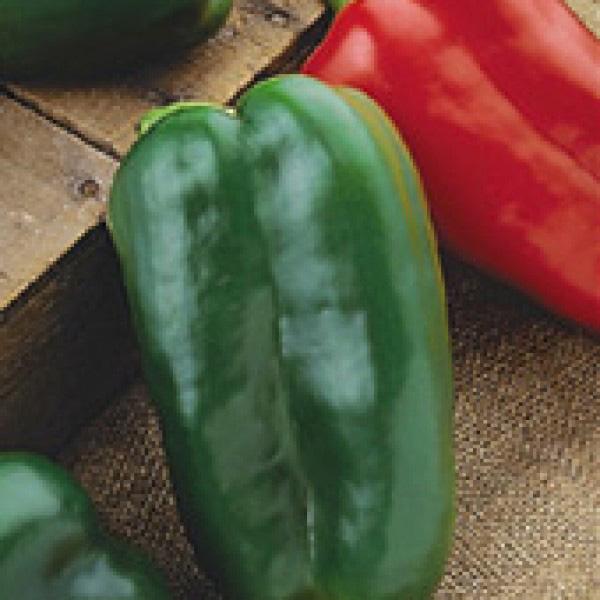 Big Bertha PS F1 Hybrid Pepper Seeds
