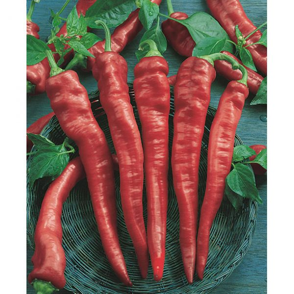 Cayenne Long Slim Hot Pepper