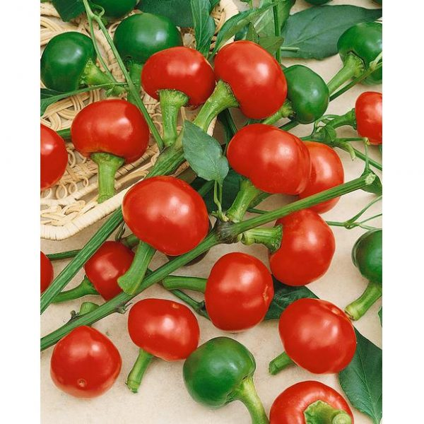 Large Red Cherry Hot Pepper