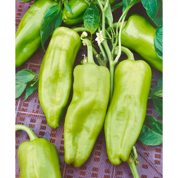 Cubanelle Sweet Fryer Pepper Seeds