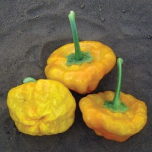 Jamaican Hot Yellow Pepper