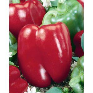 Keystone Resistant III Pepper Seeds