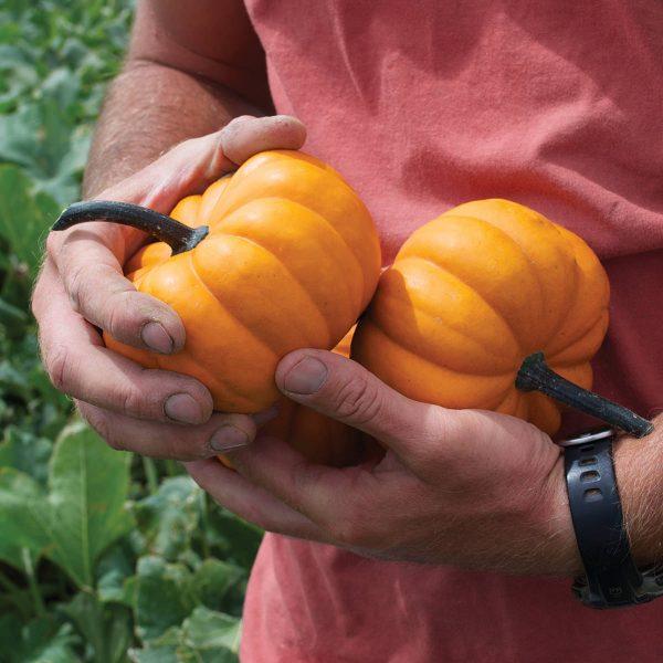 Orangita F1 Hybrid Mini Orange Pumpkin