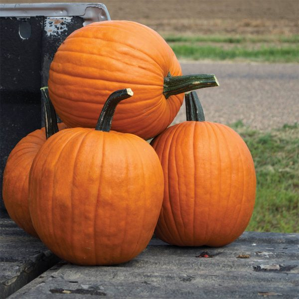 Scream II F1 Hybrid Halloween Carving Pumpkin