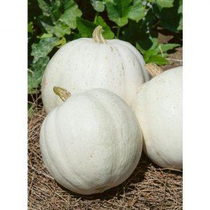 Casper White Pumpkin