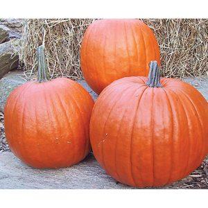 Howden Pumpkin