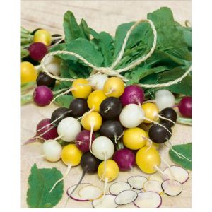 Halloween Mix Summer Radish Seeds