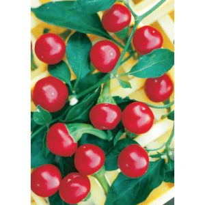 Ciliegia Piccante hot cherry pepper from our Italian Gourmet Seed Collection