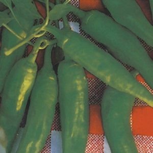 Friariello Napoletano Sweet Frying Pepper