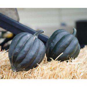 Black Bellota Hybrid Winter Acorn Squash