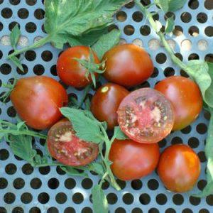 Black Truffle Tomato