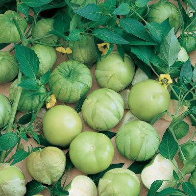 Verde Tomatillo Heirloom