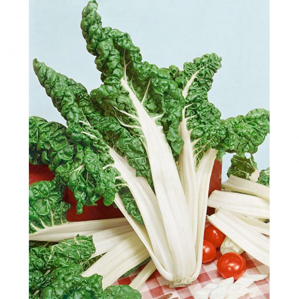 Certified Organic Fordhook Giant Swiss Chard Seeds