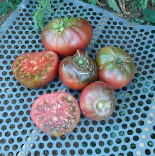 Brandywine Black Tomato