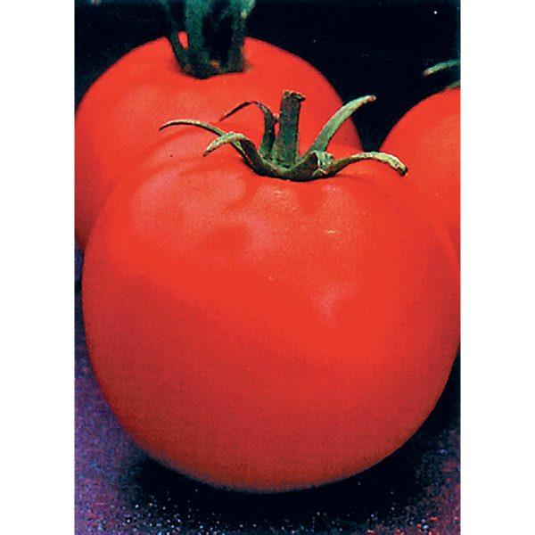 Celebrity F1 Hybrid Tomato